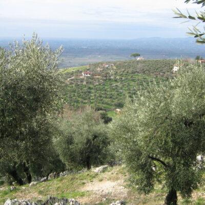 I Monti Lepini e l'olio: pochi giorni per partecipare a due concorsi